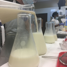 Lab technician pouring breastmilk into flask
